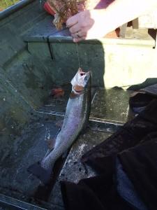 Big Canoe trout