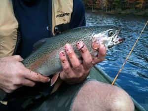 Big Canoe rainbow trout
