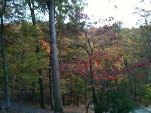 fall colors at Big Canoe