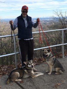 harnessleads on huskies